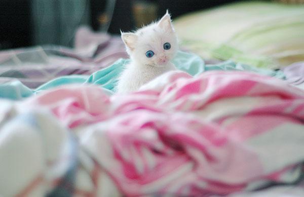 可爱猫咪幼崽 谁能不被它萌翻