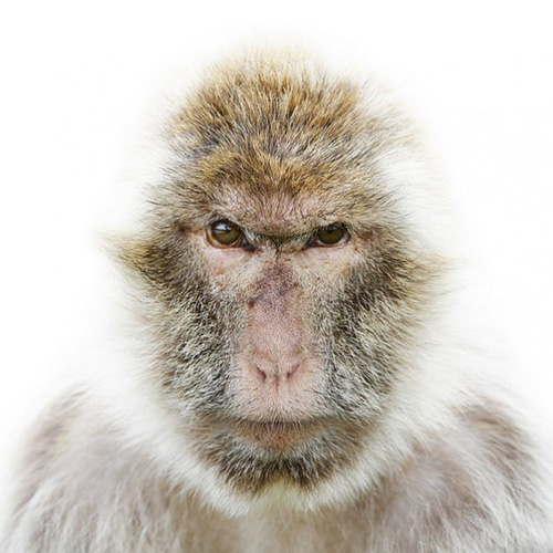 动物们拍一寸照都好严肃啊-房产频道-和讯网