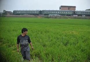 镉超标大米主要产自湖南