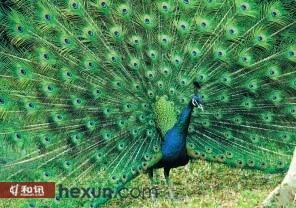 ,羽毛可以制作标本.于是,便有 在淅川县上集镇竹园移民新村有一图片