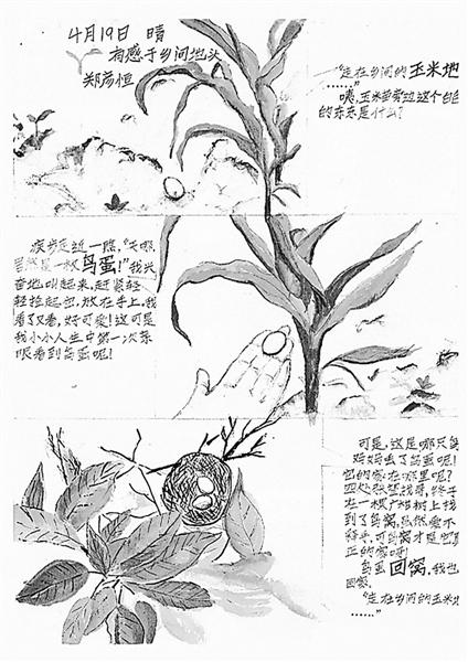 简单手绘自然笔记