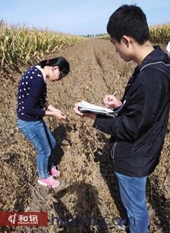 图3、考察团成员在富锦测量大豆数据图