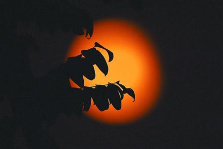 """今晚看""""红月亮"""""""