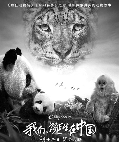 是一个动物的自然电影